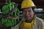 Luis Abrego, Ngäbe member of COOBANA, hauls clusters of bananas on a rail inside the processing plant. COOBANA: Finca 51, Changuinola, Bocas del Toro, Panamá. September 3, 2012.