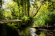 Green trees, plants and ferns surrounding the stream in St Catherine's woods, a great spot for walking in Jersey, CI