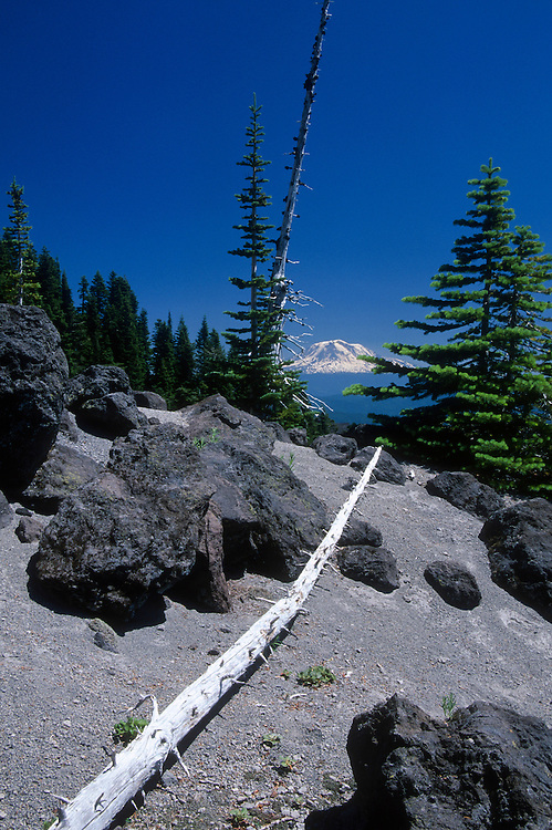 Mt. Adams from Ptarmigan Trail on Monitor Ridge on Way to Summit of Mt. St. Helens, Mt. St. Helens National Volcanic Monument, Washington, US