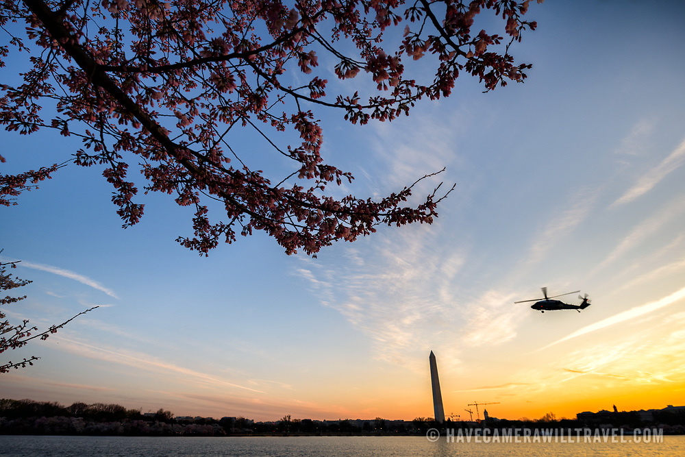A helicopter flies by before sunrise over the Tidal Basin in Washington DC. The famous Yoshino Cherry Blossoms surrounding the TIdal Basin in Washington DC burst into bloom for spring.