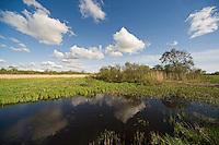 Bay Matsalu, Nature Reserve, Estonia
