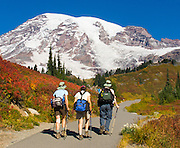 Three women hikers explore fall foliage colors in Paradise Valley in Mount Rainier National Park, Washington, USA. Skyline Trail is one of the great day hikes of the world. Mount Rainier rises to 14,411 feet elevation.