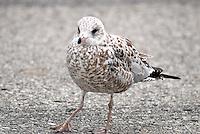 Sea Birds, Mackinac State Park