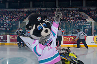 KELOWNA, CANADA - FEBRUARY 10: Rocky Racoon, the mascot of the Kelowna Rockets stands on the ice at the start of the game against the Vancouver Giants on February 10, 2017 at Prospera Place in Kelowna, British Columbia, Canada.  (Photo by Marissa Baecker/Shoot the Breeze)  *** Local Caption ***
