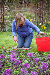 Forking over soil to remove early weeds in a border