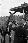 """30/06/1962 <br /> 06/30/1962<br /> 30 June 1962<br /> Irish Sweeps Derby at the Curragh Racecourse, Co. Kildare. Image shows """"Tambourine II"""", winner of the Derby."""
