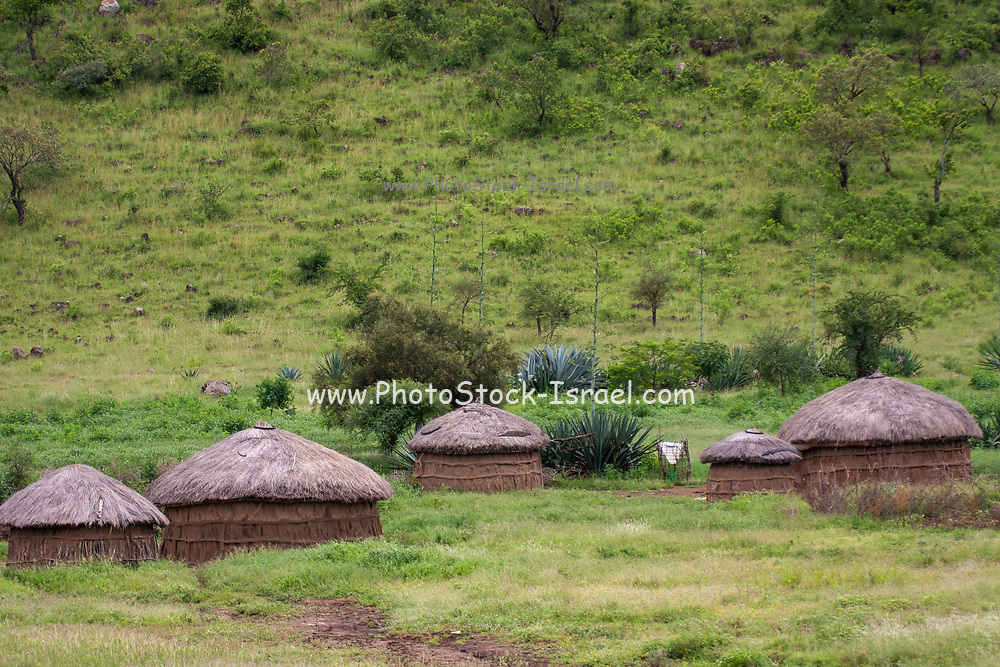 Africa, Tanzania, mud and straw dwelling in a  Maasai tribe village an ethnic group of semi-nomadic people