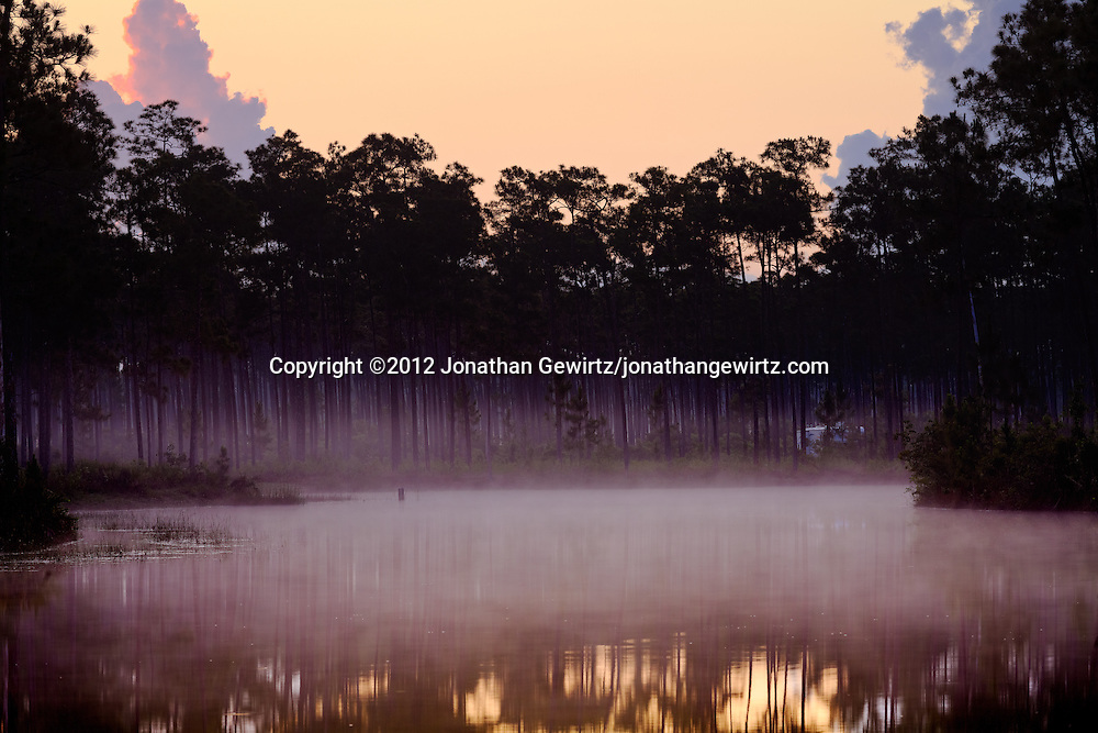 Morning fog on the pond at Long Pine Key campground in Everglades National Park, Florida. WATERMARKS WILL NOT APPEAR ON PRINTS OR LICENSED IMAGES.