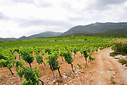 Domaine des Grecaux in St Jean de Fos. Montpeyroux. Languedoc. Calcareous limestone plateau called rendzine. Terroir soil. France. Europe. Vineyard. Mountains in the background. Soil with stones rocks. Calcareous limestone.