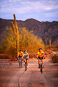 Cyclist rides Sonoran Loop Bicycle Track, White Tank Mountain Park, Maricopa County, Arizona..Subject photograph(s) are copyright Edward McCain. All rights are reserved except those specifically granted by Edward McCain in writing prior to publication...McCain Photography.211 S 4th Avenue.Tucson, AZ 85701-2103.(520) 623-1998.mobile: (520) 990-0999.fax: (520) 623-1190.http://www.mccainphoto.com.edward@mccainphoto.com.