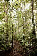 Jungle on the approach towards Angel Falls in Canaima National Park, Venezuela