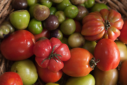 North America, Mexico, Oaxaca Province, Oaxaca, tomatos and tomatillos for sale in market