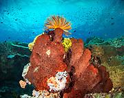 Large Natural Vase Sponge and Crinoid at Mulloway reef, Tufi, Papua New Guinea