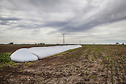 2014/11/20 – Monte Maiz, Argentina: A silo bag on a field in the region of Monte Maiz. Silo bags are more economic to storage previous harvests. Each silo can hold from 100 to 200 tones of soy depending on their size. Large scale producers tend to hold on their harvests until the price of soy reachs a satisfiying price, meanwhile small producers can't hold to them and have to sell it immediately to cover the costs of production. (Eduardo Leal)