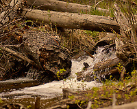 Fast running water. Rocky Mountain National Park. Image taken with a Nikon D2xs camera and 105 mm f/2.8 VR macro lens (ISO 125, 105 mm, f/2.8, 1/500 sec).