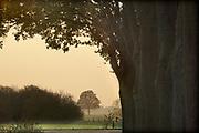 Nederland, Terborg, 11-11-2020  Landschap in de Achterhoek .Foto: ANP/ Hollandse Hoogte/ Flip Franssen