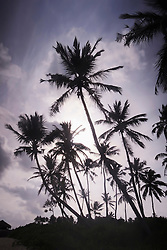Low angle view of palm trees against cloudy sky, Tangalle, South Province, Sri Lanka