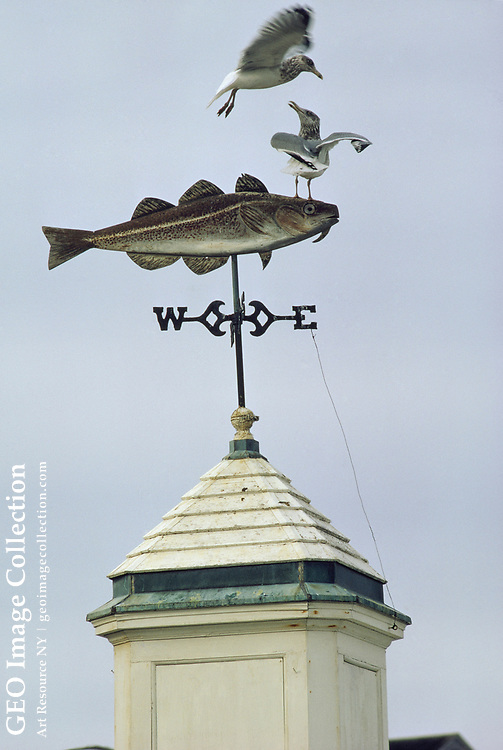 Gulls compete for space atop a cod-shaped weather vane.