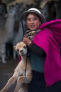 Indian woman & Alpaca baby (Vicugna pacos)<br /> Marta Tacuri<br /> Pulingue San Pablo community<br /> Chimborazo Province<br /> Andes<br /> ECUADOR, South America