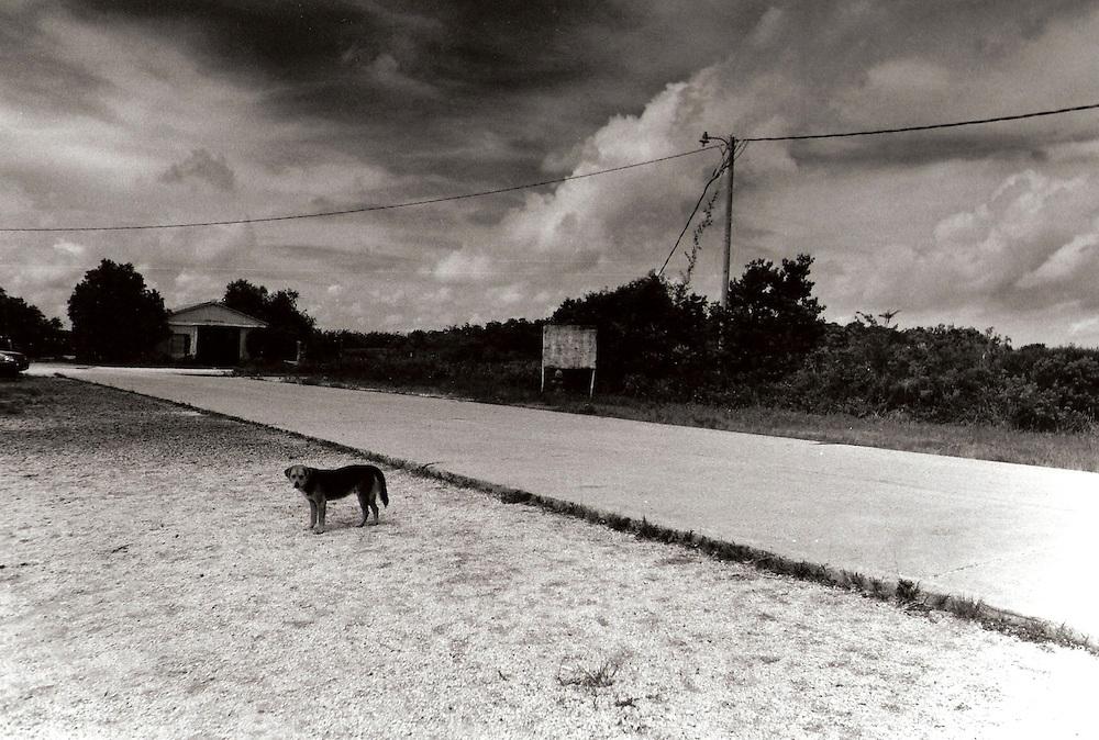 Lone Dog, Venice, LA 4/2001