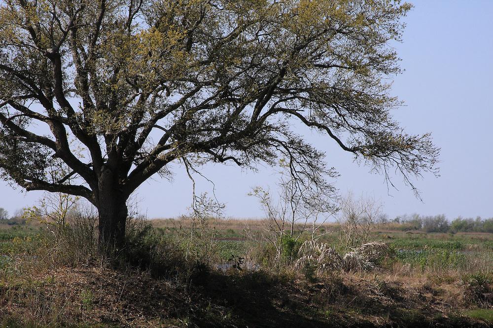 Early Spring, White Lake  Wetlands Conservation Area, Vermilion Parish, LA