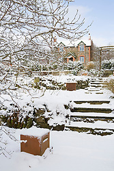 View up steps towards the house in snow. Magnolia x loebneri 'Leonard Messel' to the left