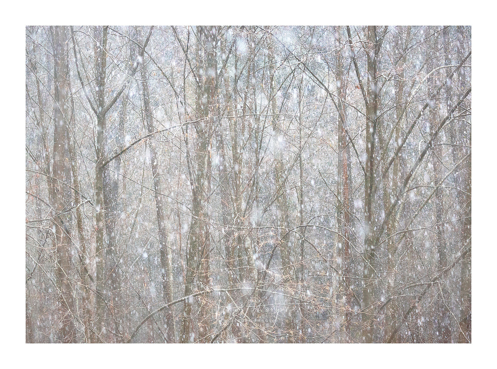 heavy snow in forest with willow tree creating snow globe effect