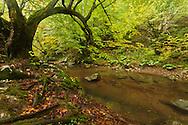 Early autumn in Strandzha Mountain