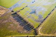 Nederland, Gelderland, Randwijk, 11-02-2008; kale winterse bomen in het drassige land van de Randwijksche Uiterwaarden (Gemeente Heteren) aan de Zuidoever van de Nederrijn ter hoogte van Wageningen en Renkum; Nederland Waterland; ..luchtfoto (toeslag); aerial photo (additional fee required); .foto Siebe Swart / photo Siebe Swart