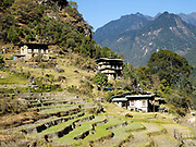 Farmhouses and rice terraces in the remote mountain village of Gyenshari in Western Bhutan. Despite rapid urbanisation, the majority of people, 66% of all households, still live in rural Bhutan, most dependent on the cultivation of crops and livestock breeding.