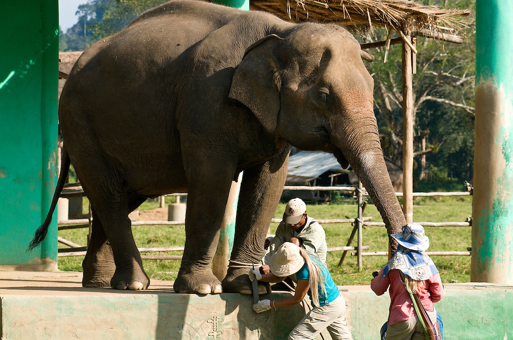 """Carol Buckley (left) and Jody Thomas (right) give an elephant a pedicure at the Elephant Nature Park near Chiang Mai, Thailand.  Sangduen """"Lek"""" Chailert founded the park as a sanctuary and rescue centre for elephants.  The park currently has 32 elephants sponsored and supported by volunteers from all over the world."""