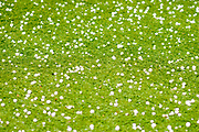 Hail rocks on the (synthetic) lawn. Photographed in Tel Aviv, Israel in May