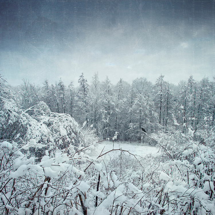 Snow covered trees<br /> <br /> Prints, iPhoneCases & much more:<br /> http://society6.com/DirkWuestenhagenImagery/winterscape-Z1N_Print