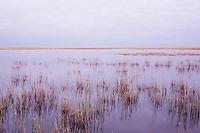 """Lagoon """"Etang du Vaccares"""", dawn, Camargue, France"""