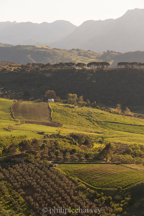 View of rural landscape in valley with fields and farmhouse, Ronda, Andalusia, Spain