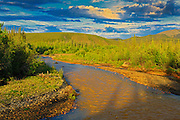 Drunken boreal forest along the Dempster Highway (between KM 105-160)<br /> Dempster Highway<br /> Yukon<br /> Canada