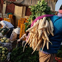A produce seller brings his daikons to the Mandi Wholesale produce market in Jwalapur, India.<br /> Photo by Shmuel Thaler <br /> shmuel_thaler@yahoo.com www.shmuelthaler.com