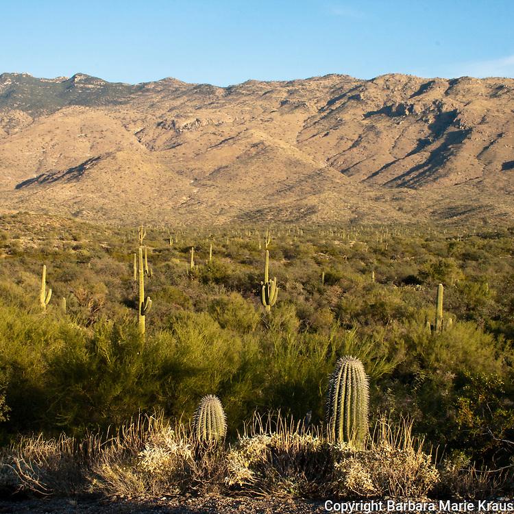 Saguaro National Park, Tucson. Rincon Mountains.