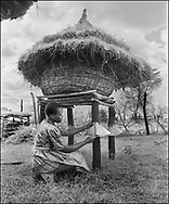 Karamajong women fitting a metal cone to stop rats and other rodents climbing the supports to the raised grain bin with a thatched roof . Karamajong of Karamoja, Uganda 1980