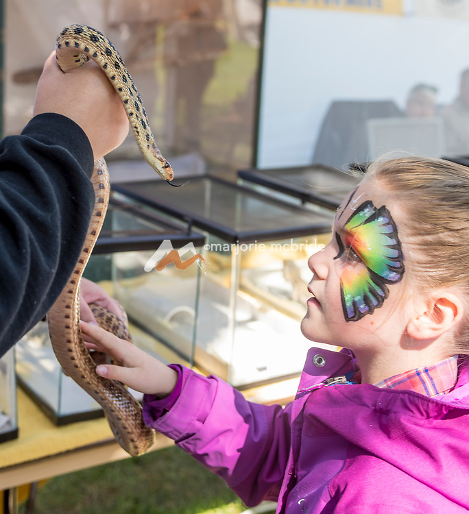 Little Girl enjoys touching a snake at the Thousand Springs Art Festival at Ritter Island near Hagerman, Idaho. MR