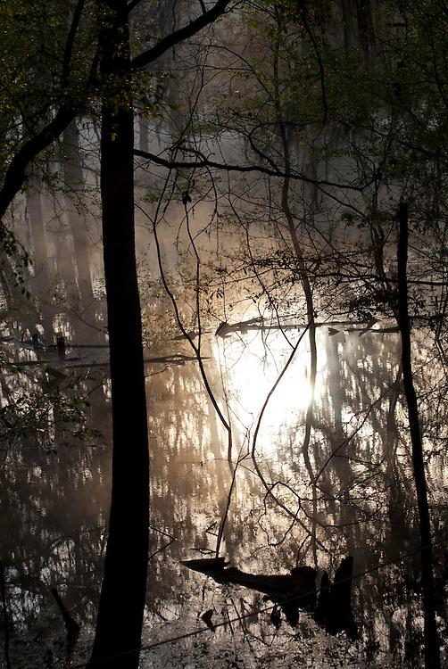 Sunrise scene on the Suwannee river in Florida, near the confluence of the Suwannee and the Itchetucknee.