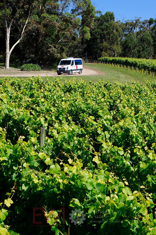 Small tourist bus driving through vineyard Larger JPEGS and TIFFs available. Contact us via  www.photograhy4business.com