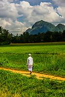 Rural scene, Udawela, Sri Lanka.