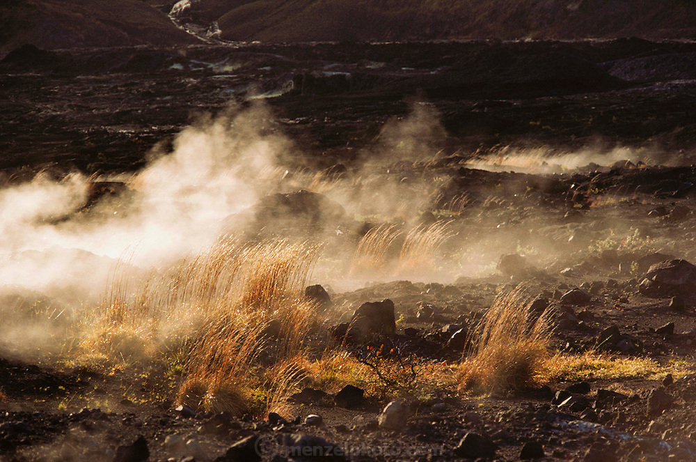 Grass growing amid the steam-venting lava formations at Halemaumau, on the Big Island, Hawaii. USA.