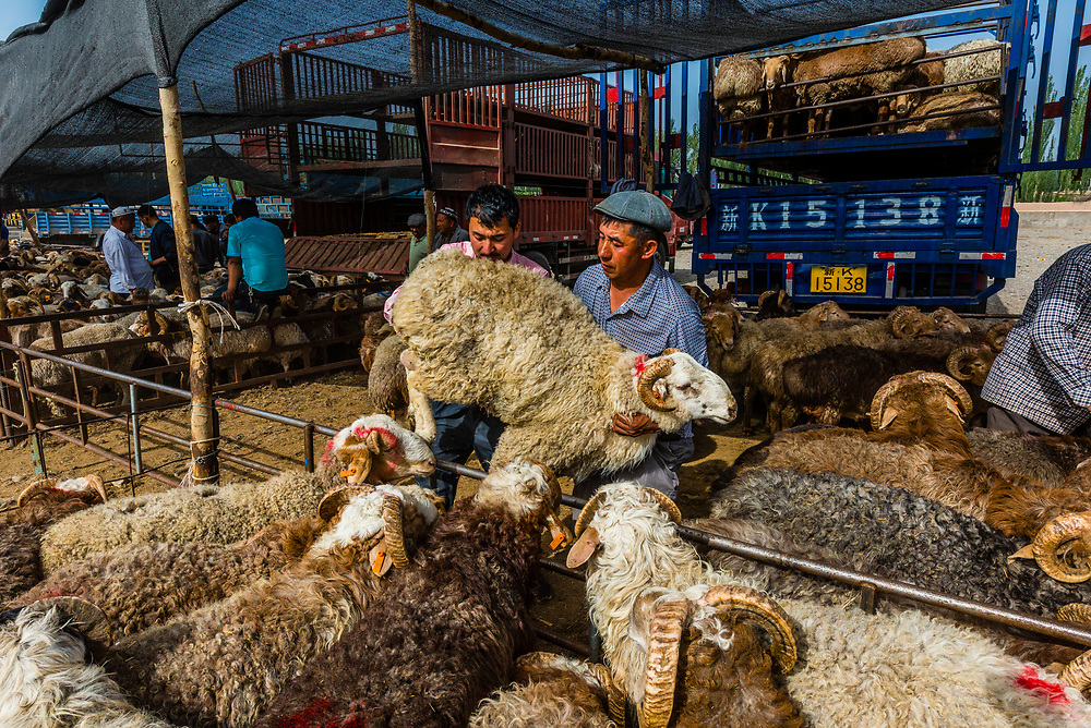 Goats being traded at the Sunday Livestock market just outside Kashgar (China's westernmost city), Xinjiang Province, China. Kashgar is along the Silk Road, near Tajikistan and Pakistan.