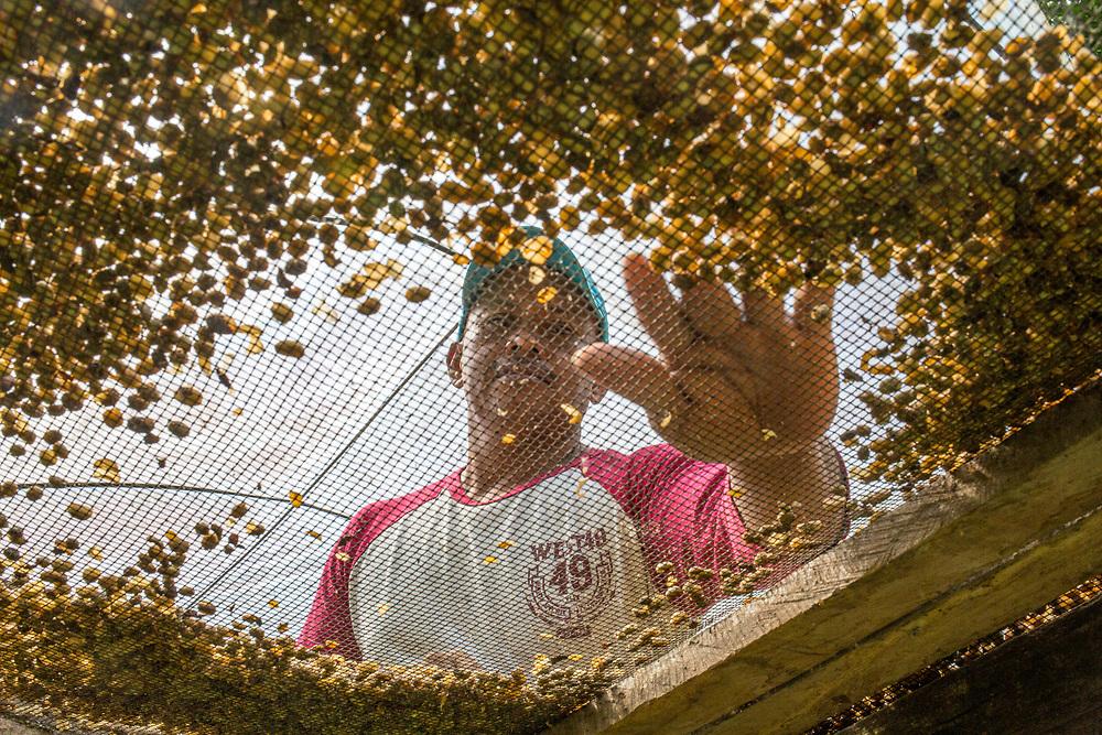 Manuel García under his solar drying area on his farm in San Benito, El Manantial. A member of the Flor de Dalia coop in Jinotega, Nicaragua, Manuel produces organic coffee, cocoa and honey.