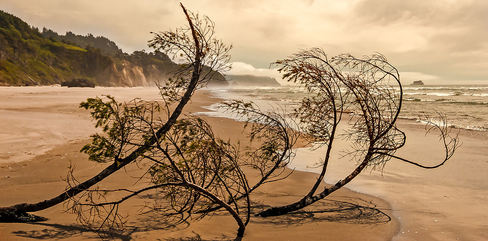 SUBJECT: Pacific Beach IMAGE: A conifer driftwood embedded in the sand provides an elegant veil against the backdrop of bluffs, waves, mist and clouds on this wind-swept Pacific beach.