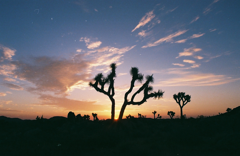 1. When was this photo taken?<br /> <br /> 2015<br /> <br /> 2. Where was this photo taken?<br /> <br /> Joshua Tree National Park<br /> <br /> 3. Who took this photo?<br /> <br /> Me - Marisa Sarto<br /> <br /> 4. What are we looking at here?<br /> <br /> I'm not a morning person. It was my first time in Joshua Tree with three French people that have visited once before. We got up super early to get some sunrise shots and afterwards I felt silly being a Californian native whose never been to JT. I blame my parents.<br /> <br /> 5. How does this old photo make you feel?<br /> <br /> Not old at all.<br /> <br /> 6. Is this what you expected to see?<br /> <br /> Yup.<br /> <br /> 7. What kind of memories does this photo bring back?<br /> <br /> How I should wake up and see the world in the morning light.<br /> <br /> 8. How do you think others will respond to this photo?<br /> <br /> They'll remember falling in love with Joshua Tree or remember that they still need to visit.