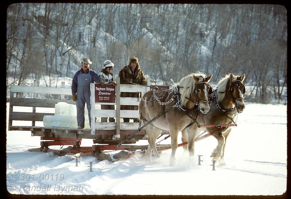 Sleigh pulled by Belgian horse team carries ice blocks across Pickerel Lake;St Paul Wntr Carn. Minnesota