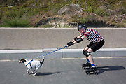 A teenage boy on roller skates wearing full protective gear is pulled along a walkway by a Jack Russell dog, Sunny Sands beach, Folkestone, Kent, UK.